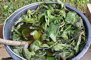 Trucs & astuces du jardinier - Désherbage naturel  Purin-d-ortie-005